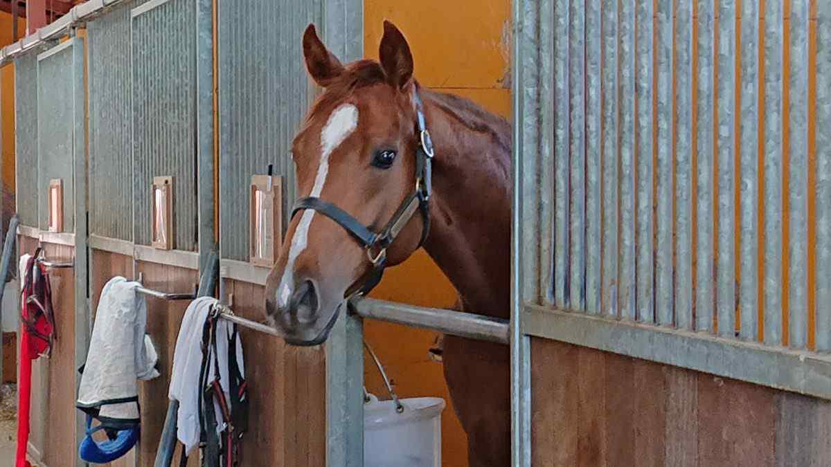 風間さんのところの印鑑で契約した馬