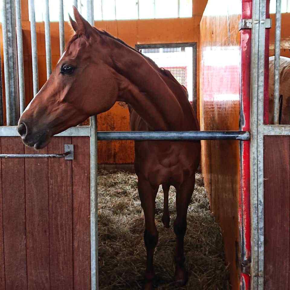 馬のシトリンちゃん